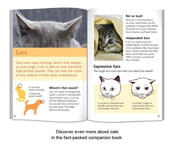 BCP_WildCards-Cats-03